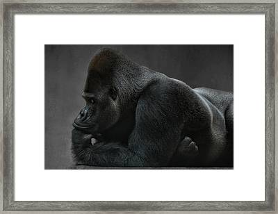 Relaxed Silverback Framed Print by Joachim G Pinkawa