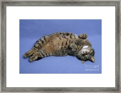 Relaxed, Sleepy Cat Framed Print by Jean-Louis Klein & Marie-Luce Hubert