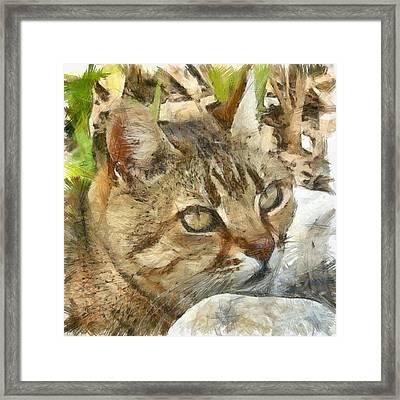 Relaxed Tabby Cat Resting In Garden Framed Print
