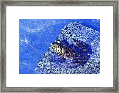 Relaxing In The Pond At A Local Vineyard...ahhh Framed Print by Margaret Hood