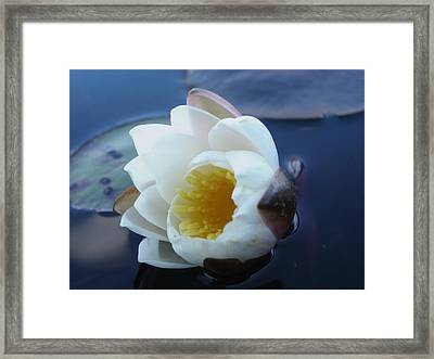 Framed Print featuring the painting Relaxing In The Pond by Martha Ayotte