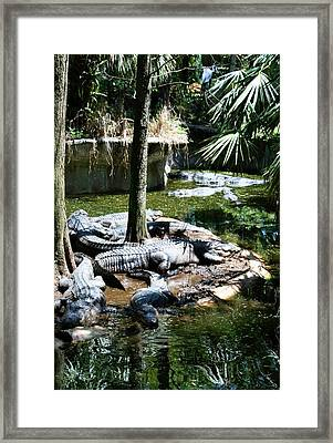 Relaxing In The Swimming Hole Framed Print