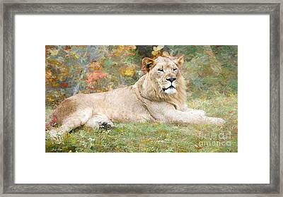 Relaxing Framed Print by Judy Kay