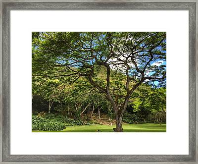 Relaxing Under The Tree Framed Print
