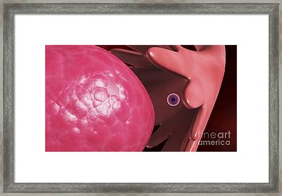 Releasing Of Egg From The Female Framed Print