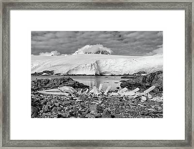 Framed Print featuring the photograph Remains Of A Giant by Alan Toepfer