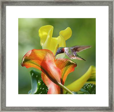 Remarkable Inspiration  Framed Print