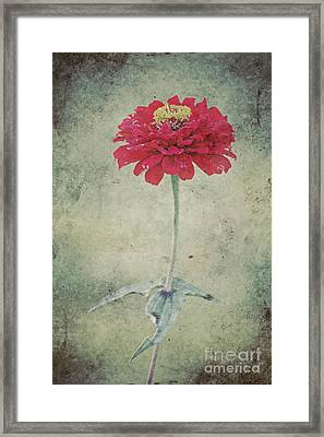 Remeber Me Framed Print by Angela Doelling AD DESIGN Photo and PhotoArt