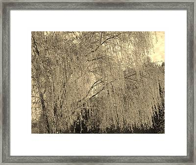 Remember Our Willow Framed Print by Mary Zeman