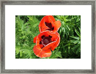 Remember Red 1 Framed Print