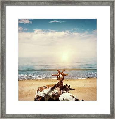 Remember This Day Framed Print by Wim Lanclus