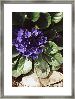 Remember When Framed Print by Jan Amiss Photography