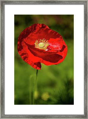 Framed Print featuring the photograph Remembering by Onyonet  Photo Studios