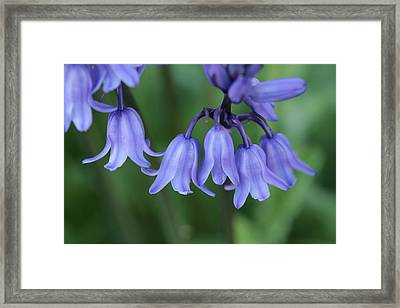 Remembering Rapunzel Framed Print by Connie Handscomb