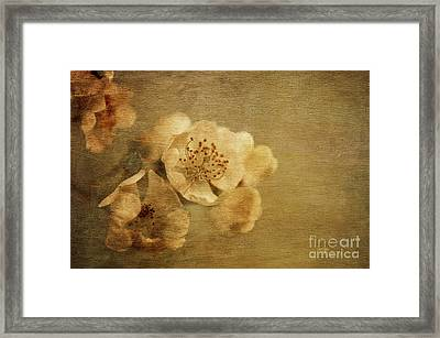 Remembrance Framed Print by Lois Bryan
