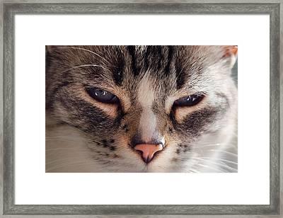 Remi Cat Framed Print