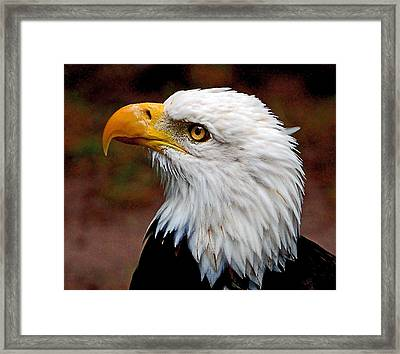 Reminiscent Bald Eagle Framed Print by Donna Proctor