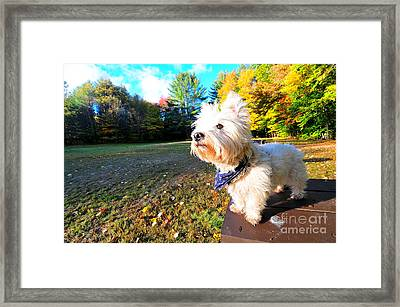 Reminiscing Westie Framed Print by Catherine Reusch Daley