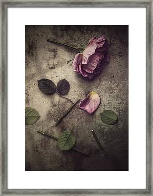 Remnants Framed Print by Amy Weiss