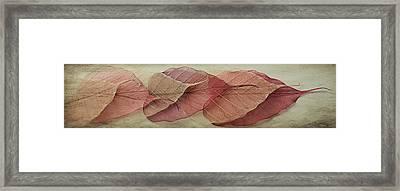 Remnants Of Summer Days Framed Print by Maggie Terlecki