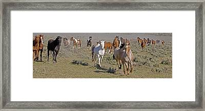 Framed Print featuring the photograph Remuda by Judy Deist
