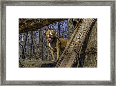 Remy In Tree Oil Paint More Pop Framed Print