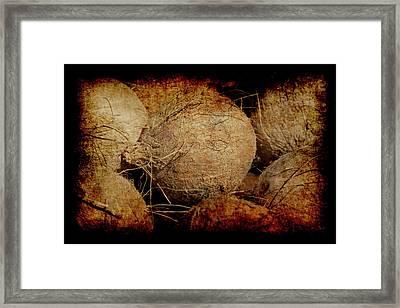 Renaissance Coconut Framed Print