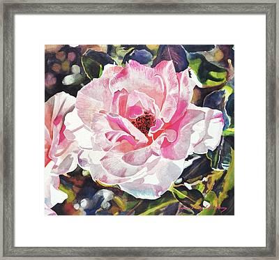 Renaissance Rose Blossom Framed Print