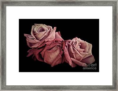 Renaissance Roses Framed Print