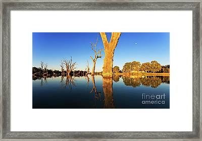 Renamrk Murray River South Australia Framed Print by Bill Robinson