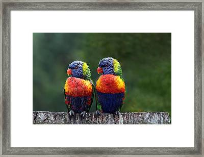 Rendezvous In The Rain Framed Print by Lesley Smitheringale