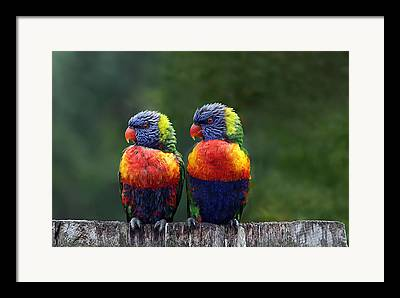 Parrots Framed Prints
