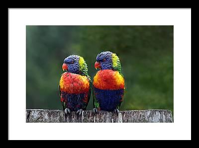 Parrot Framed Prints