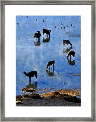 Framed Print featuring the photograph Rendezvous by Skip Hunt