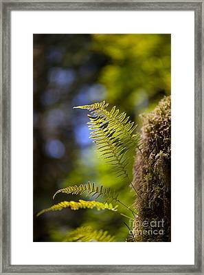 Renewal Ferns Framed Print
