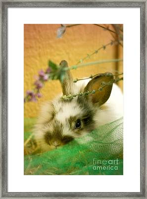 Renewal Framed Print by Lois Bryan