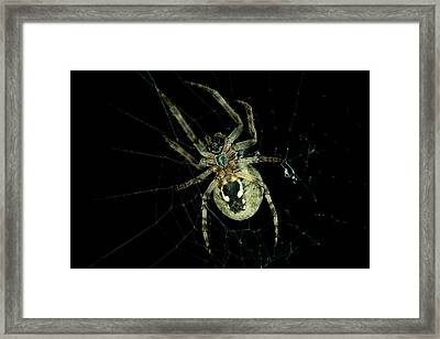 Framed Print featuring the photograph Repairing by Steven Santamour