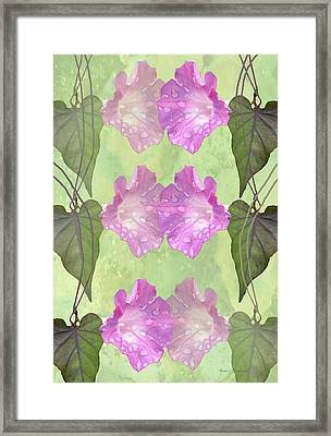 Repeated Morning Glories Framed Print by Rosalie Scanlon