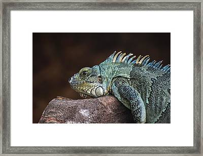 Reptile Framed Print by Daniel Precht