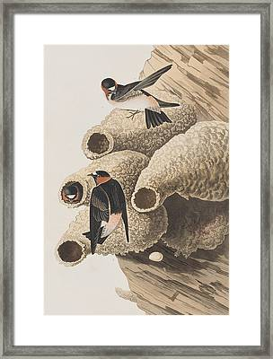Republican Or Cliff Swallow Framed Print by John James Audubon