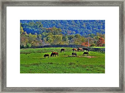 Rescue Horses Framed Print