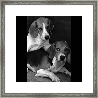 Rescued 1 Framed Print by Laura Melis