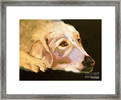 Rescued Golden Framed Print by Susan A Becker