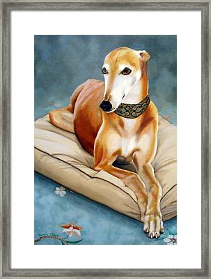 Rescued Greyhound Framed Print by Sandra Chase