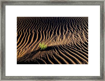 Resilient Plant Growing In Sand Framed Print by Vishwanath Bhat