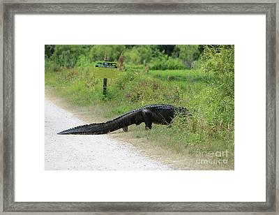 Respect Wildlife Large Gator Framed Print