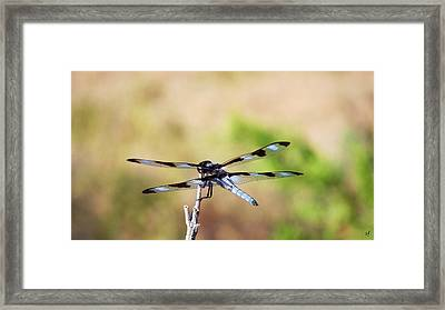 Framed Print featuring the photograph Rest Area, Dragonfly On A Branch by Shelli Fitzpatrick
