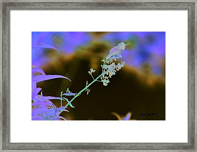 Rest Little One  Framed Print