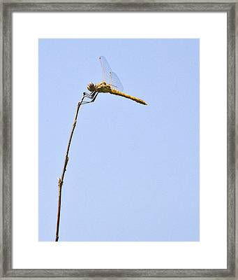 Rest Stop On The River Framed Print by Charlie Osborn