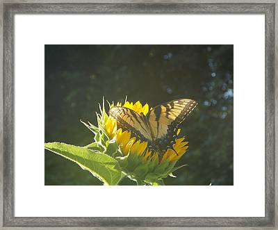 Framed Print featuring the photograph Rest Stop by Virginia Coyle